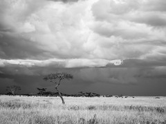 Storm on the horizon (davdenic  in the sky ) Tags: africa nature tanzania wildlife safari ngorongoro serengeti savanna savana