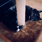 Between the scratching post and the warmer thumbnail