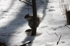 (robyn.mayer15) Tags: park lake nature birds squirrel ducks mallard canadagoose redsquirrel brittania chikadee