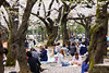 20160405-047-Picnics under Yoyogi-koen cherry blossoms (Roger T Wong) Tags: travel people holiday japan garden balloons tokyo spring picnic crowd harajuku cherryblossoms yoyogikoen 2016 canonef70200mmf4lisusm canon70200f4lis canoneos6d rogertwong