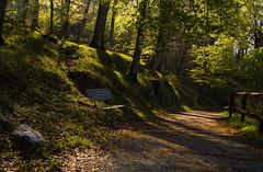 Parco del monte Barro (emanuel.foglia) Tags: italy parco nikon sentiero montagna lombardia lecco bosco panchina galbiate eremo percorso naturale montebarro nikkorafs18105 d7200