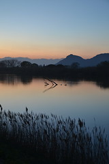 Capvespre des de la Gola del Ter (Marisa Soley) Tags: sunset water river atardecer agua delta aigua riu capvespre torroellademontgr