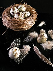 Quail eggs (lady.bracknell) Tags: macro easter nest feathers eggs quail guineafowl quaileggs