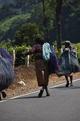 tea pickers (Rick Elkins Trip Photos) Tags: india tea kerala munnar teapickers