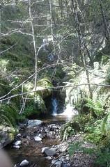 tillamookhike16 (jcravens) Tags: oregon forest hike campground galescreek stateforest tillamookforest