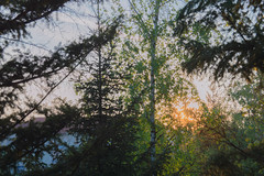 Moody sunset (Iustin Ouatu) Tags: street sunset sky cloud sun green leave nature leaves clouds composition forest landscape nikon europe natural landmark explore nikkor cloudporn excursion discover landscapephotography d3200 omot nikontop
