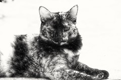 sensualizando (Rodrigo Alceu Dispor) Tags: bw pet sex cat fx appeal sensualizando