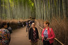 Bamboo Forest (pennykaplan) Tags: penny leena