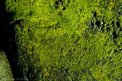 Mossy (borrowborrow20) Tags: green texture nature hawaii perception moss outdoor serene