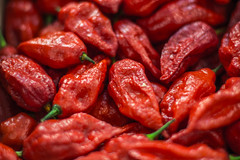 Red Hot Bhut Jolokia Peppers (marcus_lahr) Tags: brazil pepper br sopaulo pimenta buthjolokia mercadodepinheiros fotojornada fotojornadamercadodepinheiros