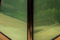 DSC_0108 (pillarsoflight) Tags: beauty oregon portland nikon adobe pdx 1855 pnw lightroom d3300