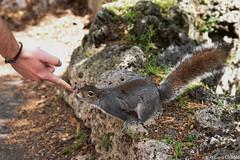 Making new furry friends (gaiamercury) Tags: park nature animal torino nikon squirrel ngc turin nikonclub nikonclubitalia nikonclubit nikond7200