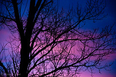 Human Soul #45 (TrojanHorsePictures) Tags: winter nature colors sunrise hike soul