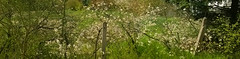 neighbor (Drew Daves) Tags: flowers trees sunlight green wet grass fence spring earlyspring unlocking