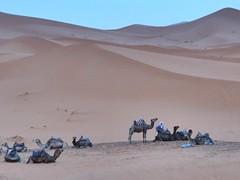 Marocco - Merzouga (Silvio A) Tags: desert marocco deserto merzouga ergchebbi