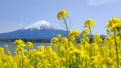 Mt. Fuji (prevlin77) Tags: life travel mountain nature japan landscape tokyo fuji mt