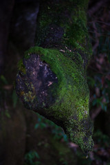 damp forest (l e o j) Tags: shadow tree wet water japan rebel waterfall moss o no drop shade stump miyazaki trunk  damp xsi  seki     miyakonojo   450d  sekinoo canoneoskissx2