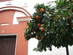 Naranja y naranjo (andreamary) Tags: orange sevilla spain architechture