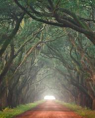 Nostalgic (Exploring Light) Tags: green fog mississippi oak alley louisiana neworleans evergreen plantation louisiana2015