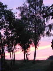 Zwetschgenbume im Abendrot (elisabeth.mcghee) Tags: sky himmel abendhimmel afterglow abendrot plumtrees zwetschgenbume