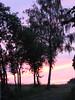 Zwetschgenbäume im Abendrot (elisabeth.mcghee) Tags: sky himmel abendhimmel afterglow abendrot plumtrees zwetschgenbäume