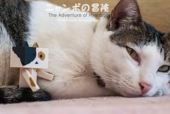 02 (= ann =) Tags: cat toy photostory yotsuba danbo danboard nyanboard