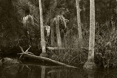 Inlet in Aripeka (Beth Reynolds) Tags: nature river palms landscape natural florida aripeka