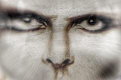 Bowie Crystalised (Stephen Reed) Tags: david dogs rock death bowie nikon diamond ipad d7000