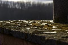 Chatoiements perdus (ur.bes) Tags: old sky urban cloud plant france abandoned glass architecture canon eos moss factory decay exploring explore ciel urbanexploration 600 nuage exploration derelict extrieur usine mousse verre urbain fabrique urbex bris urbaine abandonn eclat 600d