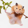 Hang In There, Baby! (Evelyn Ford) Tags: orange pet cute play whitebackground hamster paws animalplanet thunder hangon blueberrybranch
