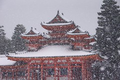 (nobuflickr) Tags: winter snow nature japan kyoto   heianjingushrine  20160120dsc09876