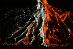 Roots (Farhiz) Tags: tree roots mizoram northeastindia baktawng