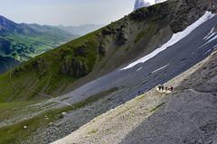 Climb every mountain. The Eiger Trail ,Canton of Bern, Switzerland no. 8004. (Izakigur) Tags: light alps topf25 alpes schweiz switzerland flickr swiss climbing grindelwald svizzera eiger topf200 ch berneroberland kleinescheidegg climbeverymountain eigertrail izakigur