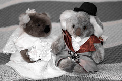 44/366 - Memories from the past.  To my wife... (denis_wright) Tags: bear wedding groom bride day valentine koala