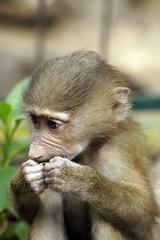 _DSC9474 (alfaluis) Tags: animal zoo pato jardim macaco tigre urso zoologico