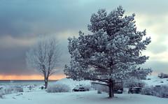 Frosty Trees (tinamar789) Tags: trees winter cold tree ice landscape frost seashore suomenlinna