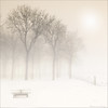 Ethereal synergy of fog and snow (Frank ) Tags: bw white mist holland monochrome fog europe sony thenetherlands topf300 ethereal highkey topf100 500faves topf200 ether noordbrabant topf400 topf500 100faves 200faves frnk 300faves 400faves nex5 e1855mmf3556oss