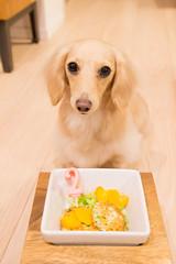 IMG_4175 (yukichinoko) Tags: birthday dog dachshund 犬 kinako ダックスフント ダックスフンド きなこ