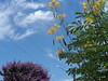 50/366 Colors (JessicaBelotto) Tags: flowers trees flores love nature colors azul cores plantas foto amor natureza flor rosa paisagem céu days honey scenario nuvens fotografia arvores projeto cenário cor amarela fotográfico fotografando 366 366daysofhoney 366diasnoano