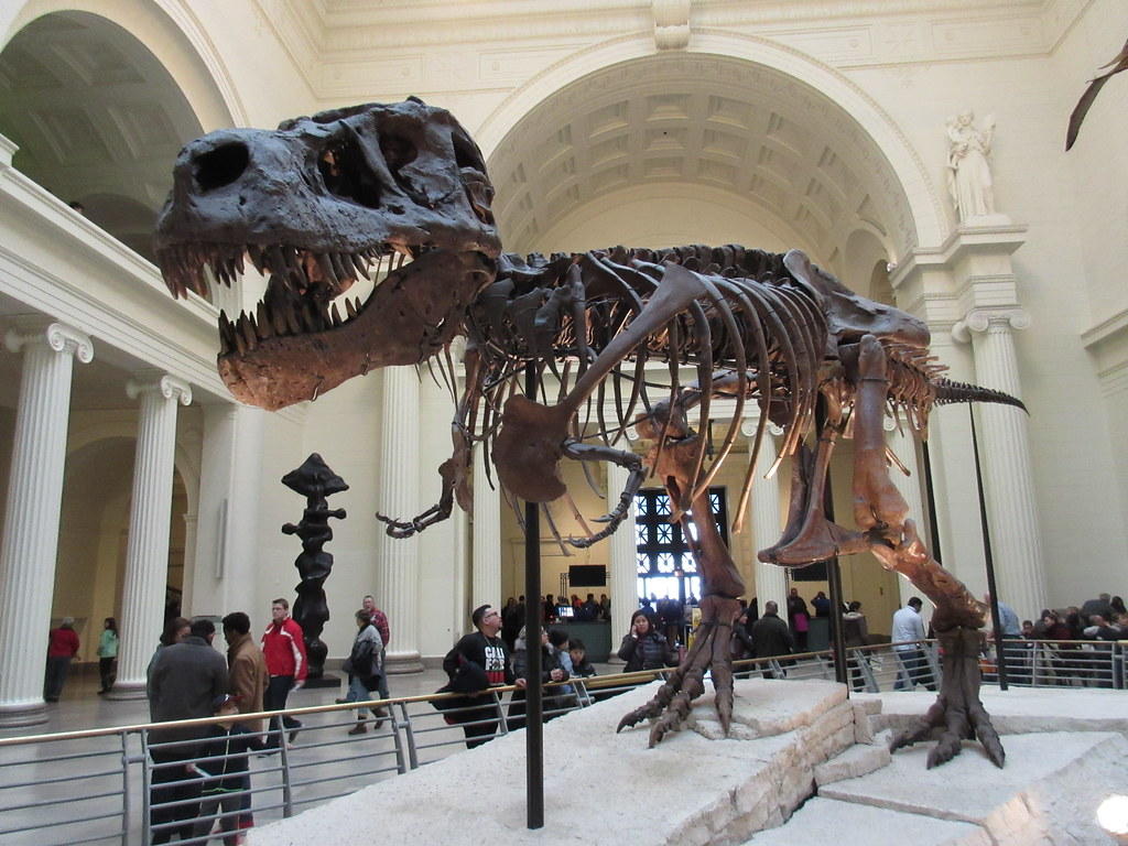 The World 39 S Best Photos Of Fieldmuseum And Sue Flickr