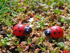 (Alin B.) Tags: love march spring funny meeting ladybird ladybug lovestory meet martie bubu primavara buburuze alinbrotea