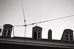 Lisbona (Arturo Gallia) Tags: portugal window lisbon tram gaviota gabbiano lisbona portogallo