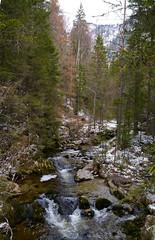 Tirolbach / Tyrol creek (rudi_valtiner) Tags: wood schnee trees winter snow alps water creek forest tirol wasser bach alpen holz wald bume tyrol steiermark styria schneealpe krampen neubergandermrz