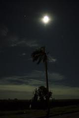 Moonshine (Leandro Budzinski) Tags: light sky moon tree nature night lens nikon good palm kit saturn jupiter vibration vibrance silluete d3200
