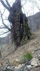 HappyTreeFriends Baumpflege (arborist.ch) Tags: tree baum treehugger treeclimbing arborist happytreefriends treecare baumpflege arboriculture