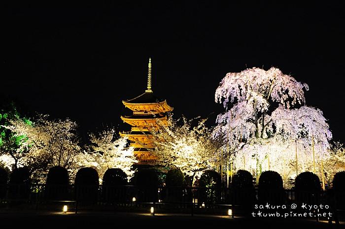 2014東寺夜櫻 (3).jpg