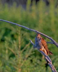 _DSC9331-1 (Kuwait.lover) Tags: uk wild usa birds photoshop 50mm us bahrain nikon asia flickr gulf lol uae kuwait oman qatar q8 ksa d4 earlybird 600mm 500px iphoneography d800e