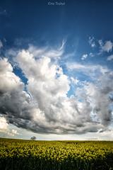 The Cloud (erictrehet) Tags: light cloud france texture landscape soleil spring nikon britain lumire ngc bretagne ciel nikkor fx nuage paysage campagne extrieur printemps couleur d610 illeetvilaine guipry nikonpassion