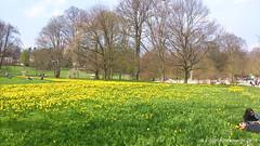 Rest in Bad Nauheim - Kurpark - Ausspannen (edgarkowa) Tags: rest bume narzissen nauheim badnauheim kurpark ausspannen