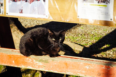 Today's Cat@2016-04-22 (masatsu) Tags: cat pentax catspotting mx1 thebiggestgroupwithonlycats